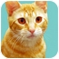 Photo 1 - Domestic Shorthair Cat for adoption in Encinitas, California - Alice