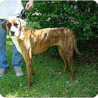 Adopt A Pet :: Jane Wayne - Kingwood, TX