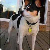 Adopt A Pet :: Rudy - Albany, NY