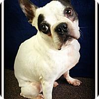 Adopt A Pet :: Finn - Pascagoula, MS