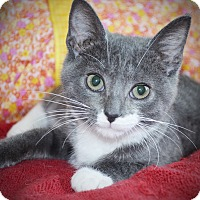 Adopt A Pet :: Willow - Xenia, OH