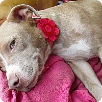 Adopt A Pet :: Mama Molly**Video** - Pasadena, CA