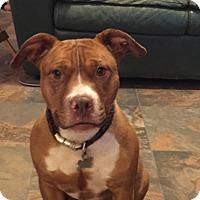 Adopt A Pet :: Candy! - Sacramento, CA