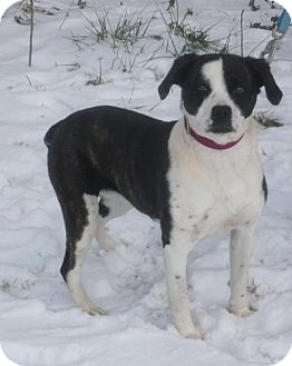 Boxer Mix Dog for adoption in Mineral, Virginia - Nellie, D8