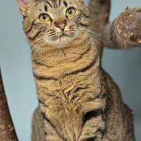 Adopt A Pet :: Candy 162263 - Atlanta, GA