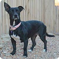 Adopt A Pet :: LOVIE - Hurricane, UT