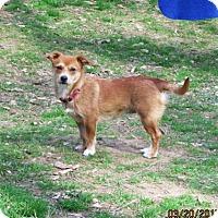 Adopt A Pet :: KRISSY - Williston Park, NY