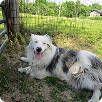 Adopt A Pet :: Leo - Minneapolis, MN