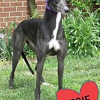 Adopt A Pet :: KIOWA WISH WANDA - Grandville, MI