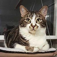 Adopt A Pet :: Cecil - McPherson, KS