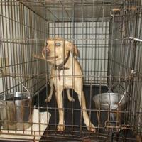 Adopt A Pet :: JENKINS - Circleville, OH