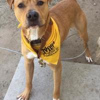 Adopt A Pet :: Polo - Peace Dale, RI