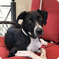 Adopt A Pet :: Frankie - Inglewood, CA