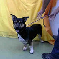 Adopt A Pet :: URGENT 8/23 @ DEVORE - San Bernardino, CA