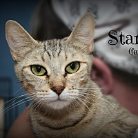 Adopt A Pet :: Star - Glen Mills, PA