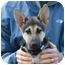 Photo 3 - German Shepherd Dog Puppy for adoption in Los Angeles, California - Noah von Christensen
