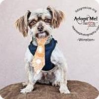 Adopt A Pet :: Winston - Shawnee Mission, KS