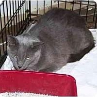 Adopt A Pet :: Bjorn - Syracuse, NY