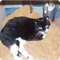 Adopt A Pet :: Sallie - North Boston, NY