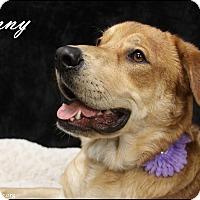 Adopt A Pet :: Sunny - Rockwall, TX