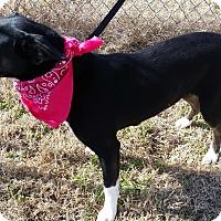 Adopt A Pet :: TORI - Cleveland, MS