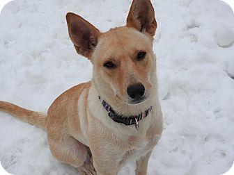 Shepherd (Unknown Type) Mix Dog for adoption in DeForest, Wisconsin - Jazmine