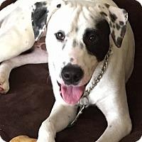 Adopt A Pet :: Rascal - Tampa, FL