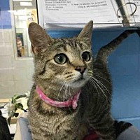 Adopt A Pet :: JANET - Canfield, OH