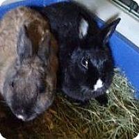 Adopt A Pet :: Francesca - Woburn, MA
