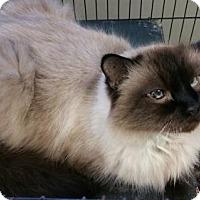 Adopt A Pet :: Rascal - Maquoketa, IA