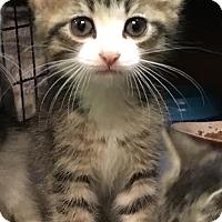 Adopt A Pet :: Philip - East Brunswick, NJ