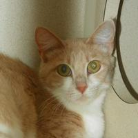 Adopt A Pet :: Providence - Durango, CO