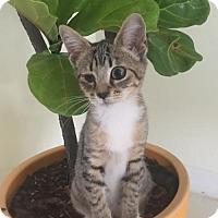 Adopt A Pet :: Lolita - Orlando, FL