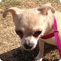 Adopt A Pet :: Blondie - Newport Beach, CA