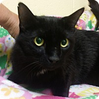 Adopt A Pet :: Johnny - Berlin, CT