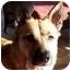 Photo 3 - Shepherd (Unknown Type) Mix Dog for adoption in Cincinnati, Ohio - Sadie