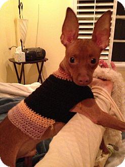 Miniature Pinscher Dog for adoption in Myersville, Maryland - Oscar
