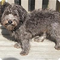 Adopt A Pet :: pickford - houston, TX