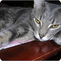 Adopt A Pet :: Lindsey - Richmond, VA