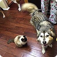 Adopt A Pet :: Cooper - Whittier, CA