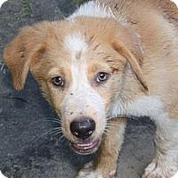 Adopt A Pet :: Hunter - PENDING - kennebunkport, ME