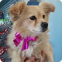 Adopt A Pet :: Maisy - Encinitas, CA