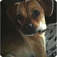 Adopt A Pet :: Lila - Seattle, WA