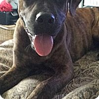 Adopt A Pet :: Sassy (Courtesy Listing) - Scottsdale, AZ