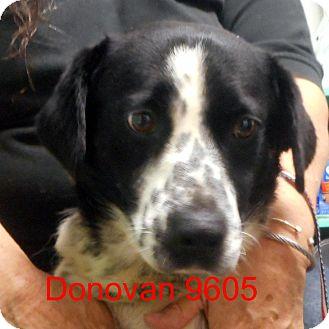 Basset Hound/Australian Cattle Dog Mix Dog for adoption in Manassas, Virginia - Donavan