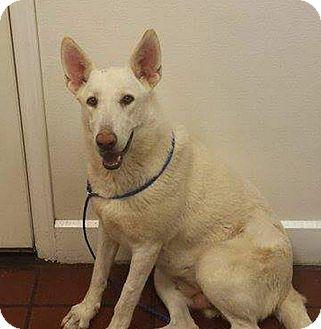 German Shepherd Dog Mix Dog for adoption in Salisbury, North Carolina - Princess Di