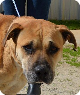 Hound (Unknown Type) Mix Dog for adoption in Sturbridge, Massachusetts - Lane