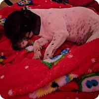 Adopt A Pet :: Monroe - Oviedo, FL
