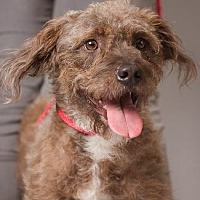 Adopt A Pet :: JOX - Pt. Richmond, CA