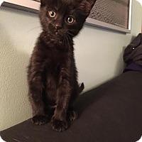 Adopt A Pet :: Alfie - Rochester Hills, MI